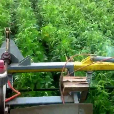 Lasco Lightning Weeder